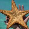 Potápanie sa a morské živočíchy