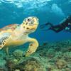 Potápačské safari v Červenom mori