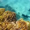 Objavovanie podmorského sveta