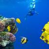 Šnorchlovanie/ potápanie