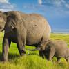 Národná prírodná rezervácia Shimba Hills