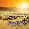 Safari v národnom parku Tsavo