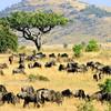Národný park Massai Mara