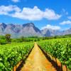 Vínne cesty Kapským mestom