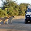 Safari v Krugerovom národnom parku