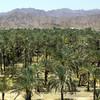 Palmová oáza vo Fujairah