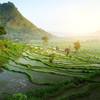 Ryžové polia v oblasti Ubud