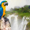 Vzácny papagáj Ara